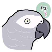 Cockatiel and Grey Parrot sticker #7242183