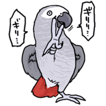 Cockatiel and Grey Parrot sticker #7242185