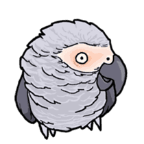Cockatiel and Grey Parrot sticker #7242187
