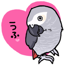 Cockatiel and Grey Parrot sticker #7242191