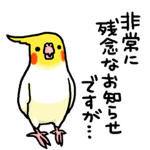 Cockatiel and Grey Parrot sticker #7242193