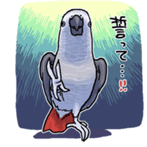 Cockatiel and Grey Parrot sticker #7242197