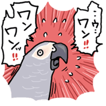Cockatiel and Grey Parrot sticker #7242198