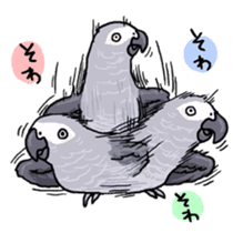 Cockatiel and Grey Parrot sticker #7242199