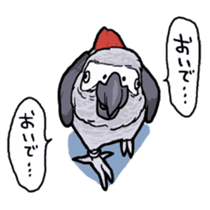 Cockatiel and Grey Parrot sticker #7242207
