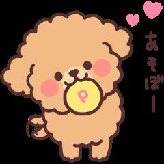 fluffy toy poodle 3set