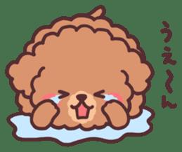 fluffy toy poodle 3set sticker #7274438