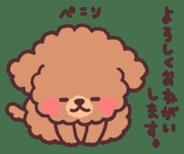 fluffy toy poodle 3set sticker #7274441