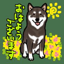 ShibaInu ZANMAI sticker #7281176