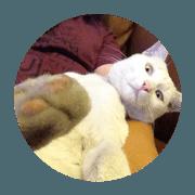 สติ๊กเกอร์ไลน์ Moomiw the cat #1