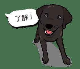 Doc the Labrador Retriever sticker #7364448