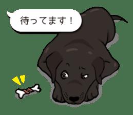 Doc the Labrador Retriever sticker #7364450