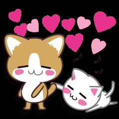 I want to hug a cat cute International