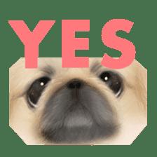 We Love Pekingese!! (English Version) sticker #7434132