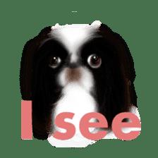 We Love Pekingese!! (English Version) sticker #7434138