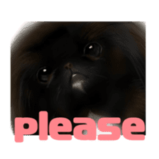 We Love Pekingese!! (English Version) sticker #7434140