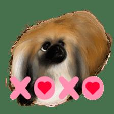 We Love Pekingese!! (English Version) sticker #7434155