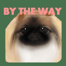 We Love Pekingese!! (English Version) sticker #7434165