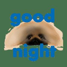 We Love Pekingese!! (English Version) sticker #7434168