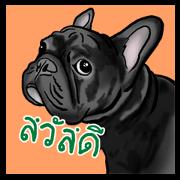 สติ๊กเกอร์ไลน์ เฟรนช์บูลด็อก สติกเกอร์ (french bulldog)