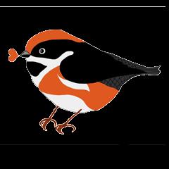 Birds in Taiwan