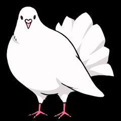Cute Pigeon2