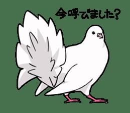Cute Pigeon2 sticker #7616035