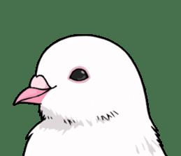 Cute Pigeon2 sticker #7616040