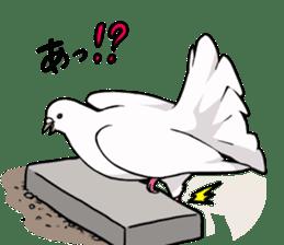 Cute Pigeon2 sticker #7616049
