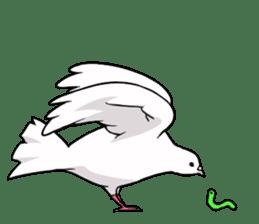 Cute Pigeon2 sticker #7616052