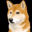 さすが!柴犬(敬語編) | LINE STORE