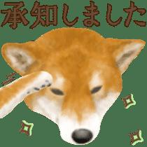 As expected! Shiba Inu sticker #7672137