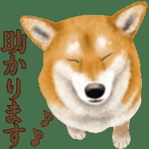 As expected! Shiba Inu sticker #7672145