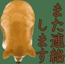 As expected! Shiba Inu sticker #7672150