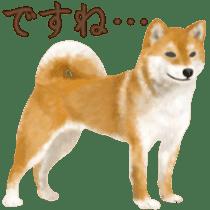 As expected! Shiba Inu sticker #7672153