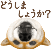As expected! Shiba Inu sticker #7672168