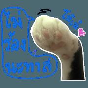 สติ๊กเกอร์ไลน์ เท้าของกระถิน (เท้าแมว) v.1