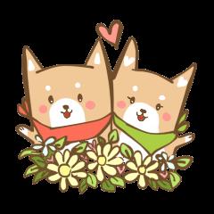 Hype&Hunny Shiba-Inu