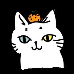 Odd Eye Cat  Muuchan