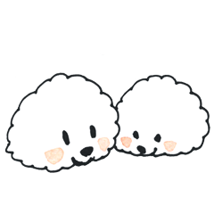 Bichon Frise fluffy dogs