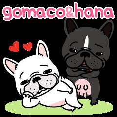 French bulldog Gomaco and Hana 2 English