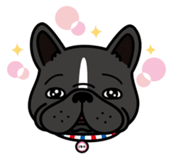 French bulldog Gomaco and Hana 2 English sticker #7923736