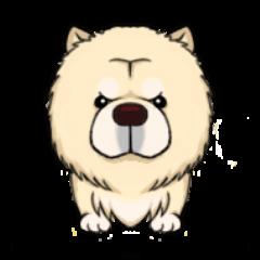 Chow Chow Polar Bear in Taiwan