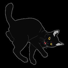 Rial-based black cat