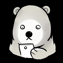 Cutest bear's Arctic
