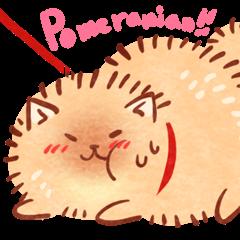 Cute fluffy Pomeranian