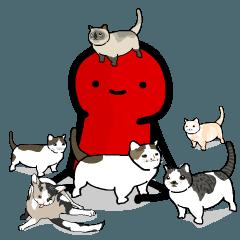 แมว 11 ตัวของเรด