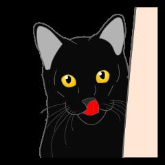 Love of Rial-based black cat