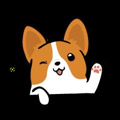 Corgi Dog KaKa - Cutie