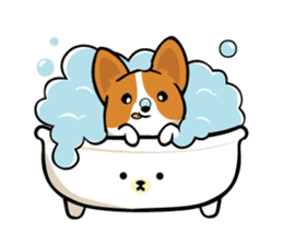 Corgi Dog KaKa - Cutie sticker #8253495